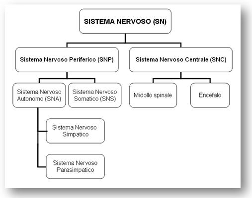 Le Basi Neurofisiologiche